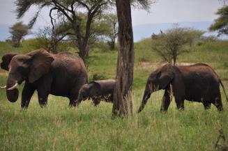 July_2015_March_Break2_-_Tanzania_Information